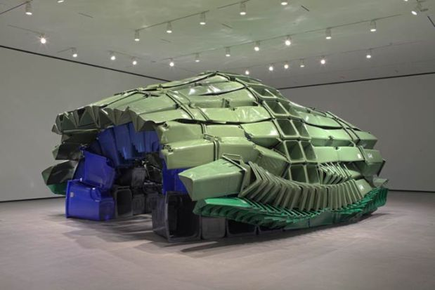 carapace-image_www.youraga.ca