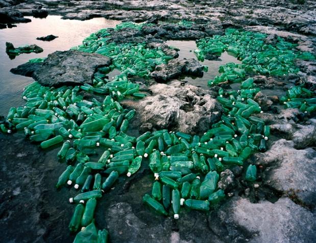 Algas (Algae), 2013