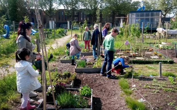 07_allotment-gardens-robson-park